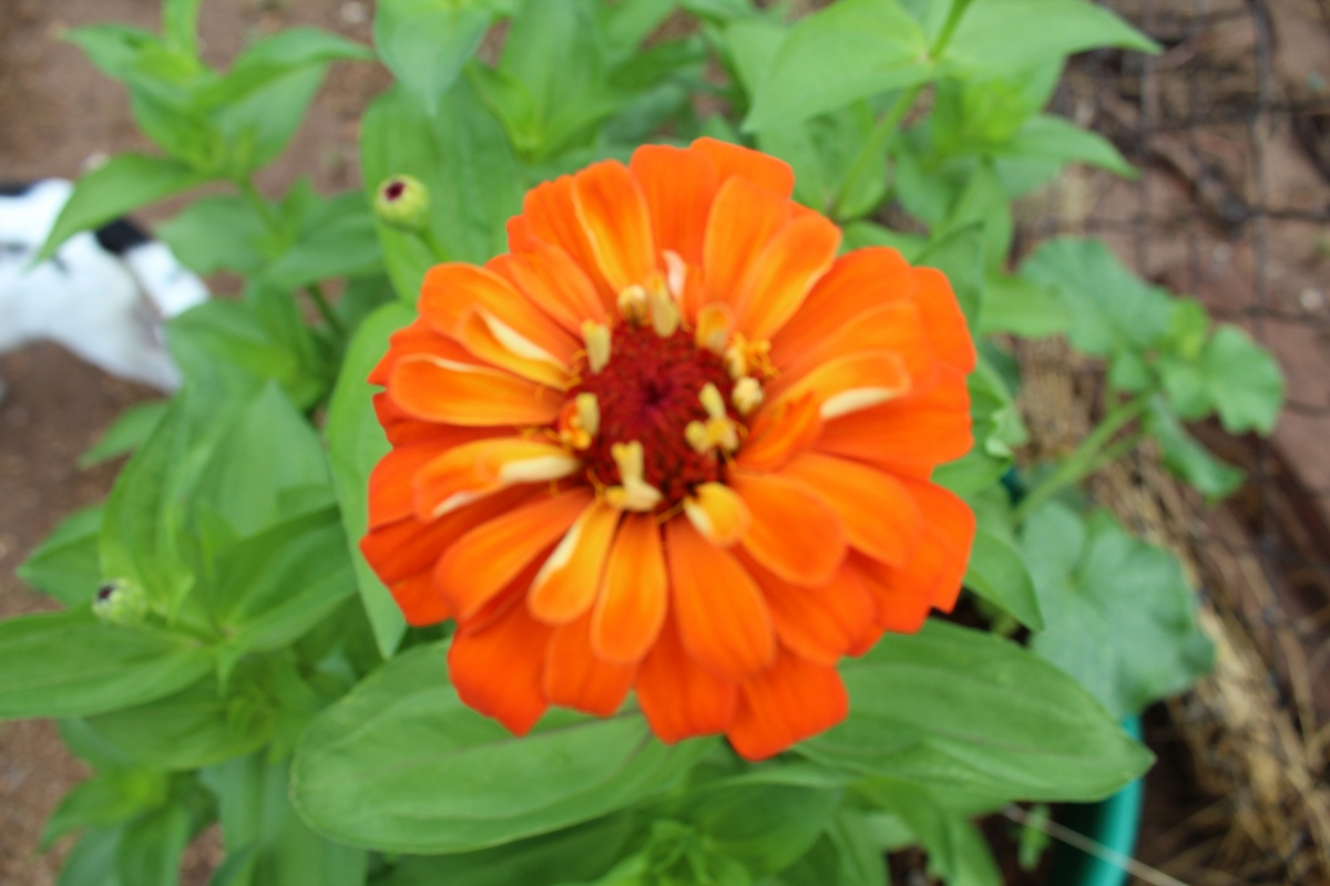 Morning garden love